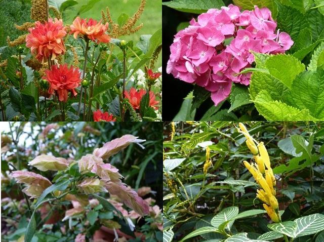 Botanique de Metz 10 - 16 07 10