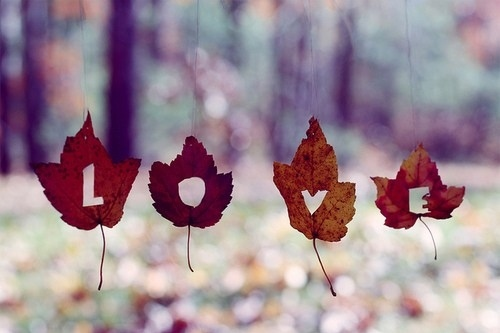 autumn, fall, leaf, leaves, love