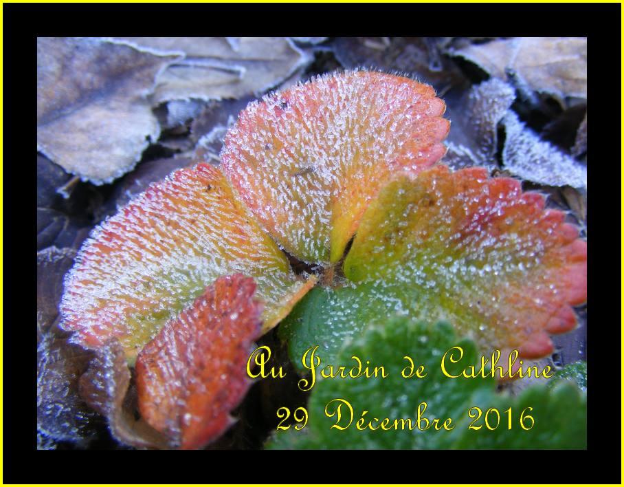 Jardiner avec la lune du 21 au 31 Janvier 2017