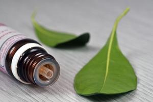 L'eucalyptus pour lutter contre les maux de tête