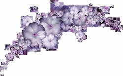 Couleur violet et rose