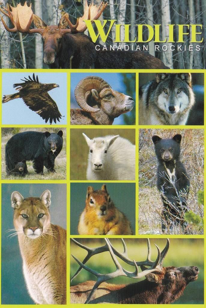 J'aime beaucoup cette carte parce que j'adore les animaux :-)