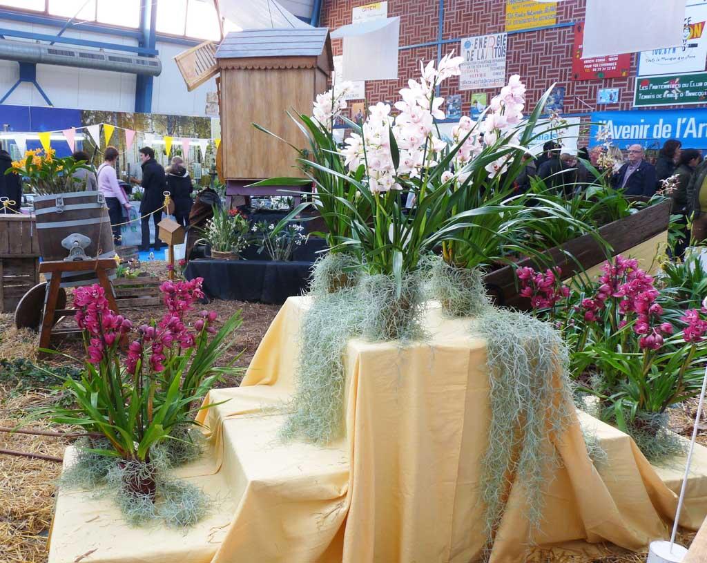 Exposition d'orchidées à Annequin (2)
