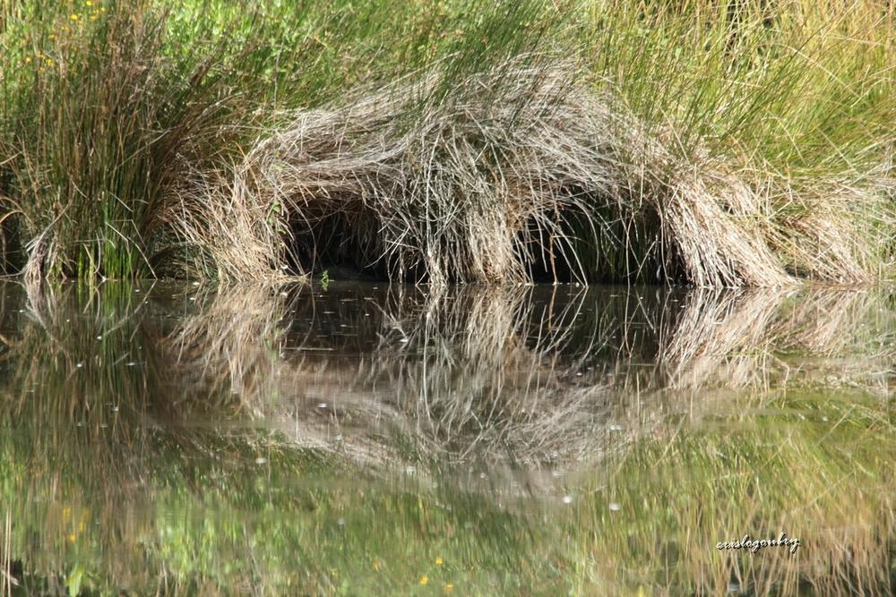 Dans le marais....
