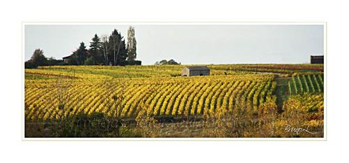 paysages du vignoble
