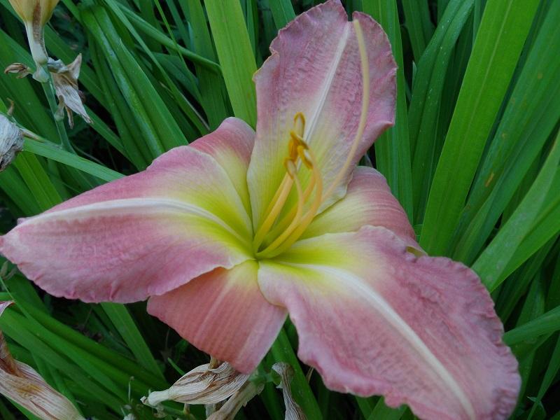 des floraisons et des floraisons ...