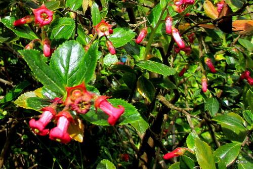 Des petites fleurs rouges