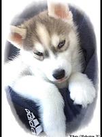 Neïko (2 mois)