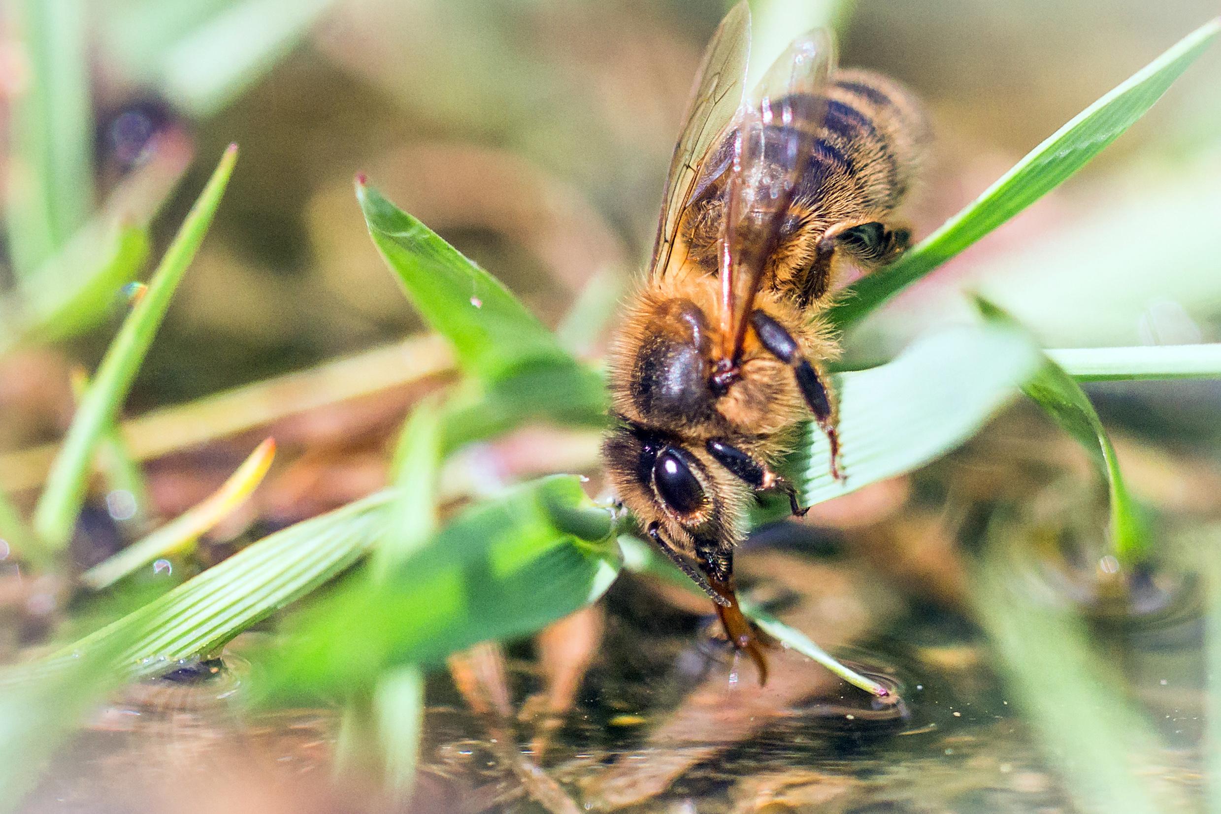 abreuvoir a abeilles