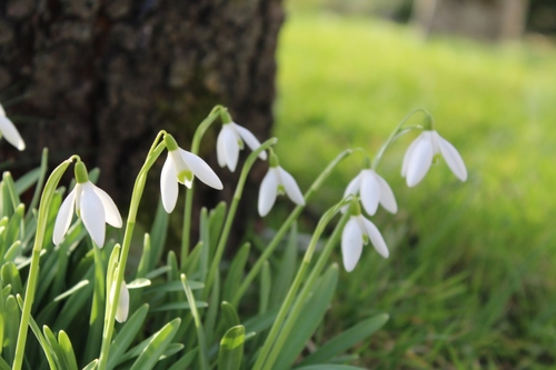 C'est déjà le printemps