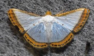 Lepidoptères nocturnes divers
