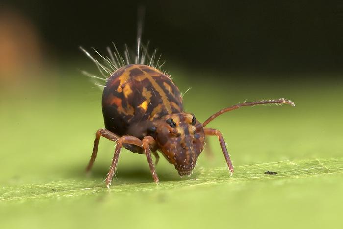 Les Photos Macro Fascinantes D'insectes..