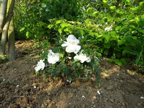 les nouveautés au jardin