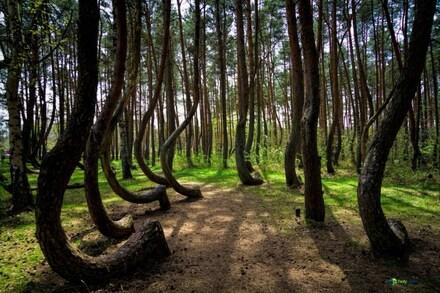 5/8/19 : Forêt de Bébour (Réunion) 1/5 -