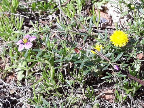 Des petites fleurs partout