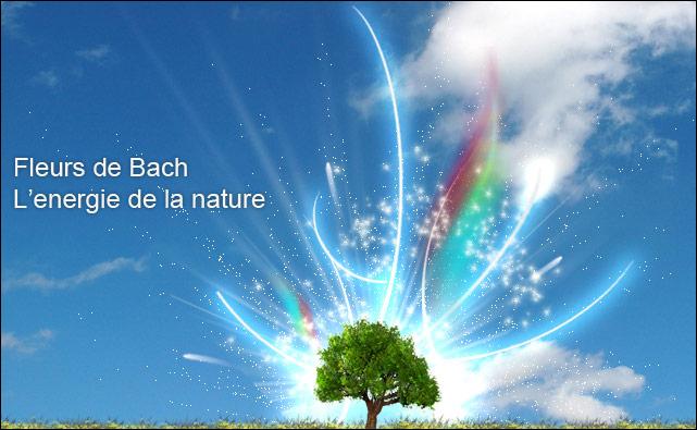 Les bienfaits des fleurs de Bach