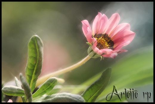 Fleurs diverses 3