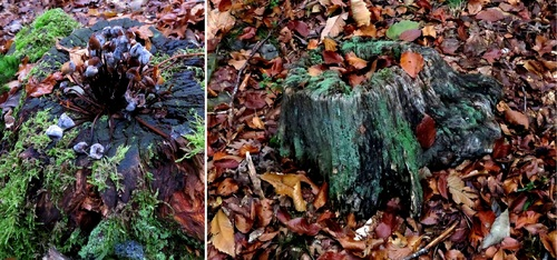 A la recherche des champignons dans la forêt de Chambaran