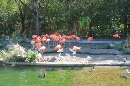 zoo 2454