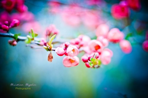 Une photo | Le printemps déploie ses couleurs