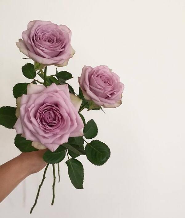 11/5/20 : Fleurs...de mon jardin  (1/2) - Poésie & Histoire fleurs