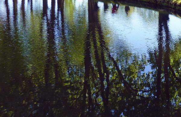 Promenade à l'Abbaye de Royaumont