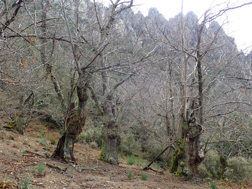 Manganu - Creno - Pastricciola
