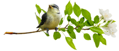 Oiseaux 8