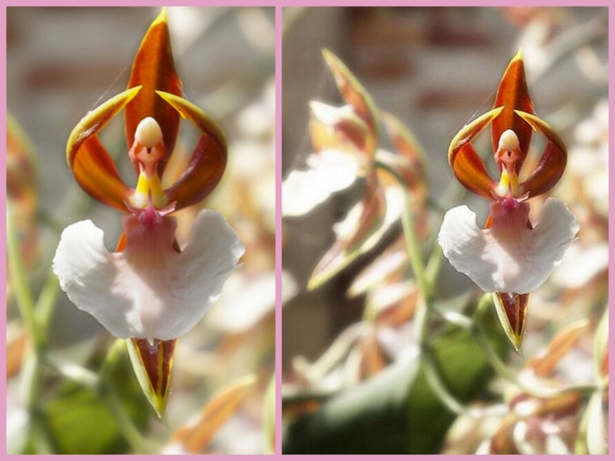 Des fleurs rares, bizarres, originales !