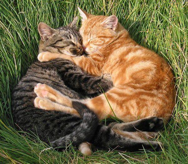 Les chats aussi c'est pour la vie