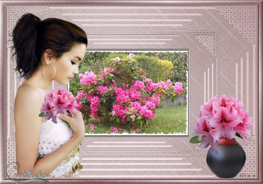 Les rhododandrons