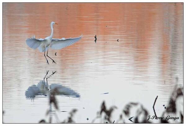 Couchers de soleil sur le lac de Marcenay, de très belles photos de Jean-Pierre Gurga...