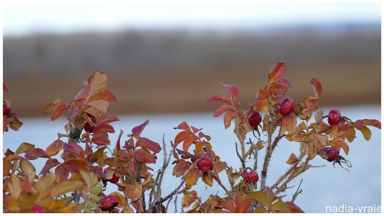 Autres photos d'automne dans le marais.