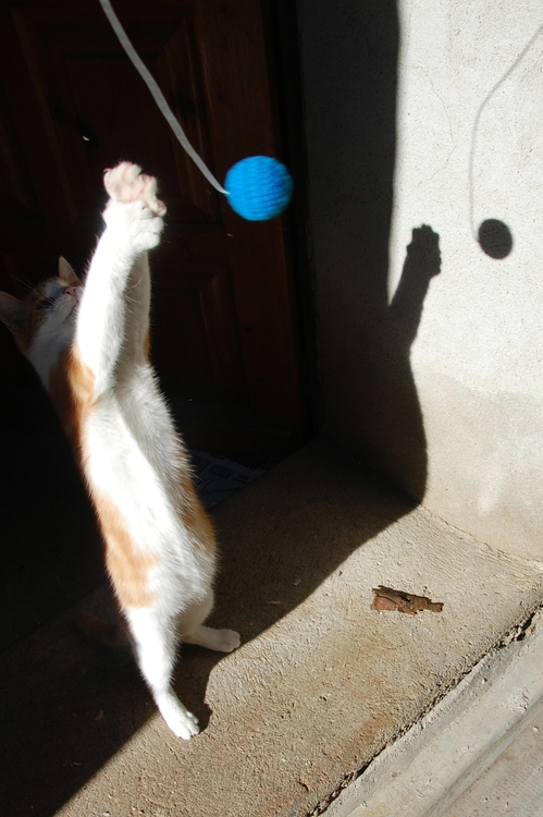 chaton05octi