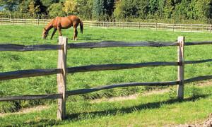 """Résultat de recherche d'images pour """"enclos bois chevaux"""""""