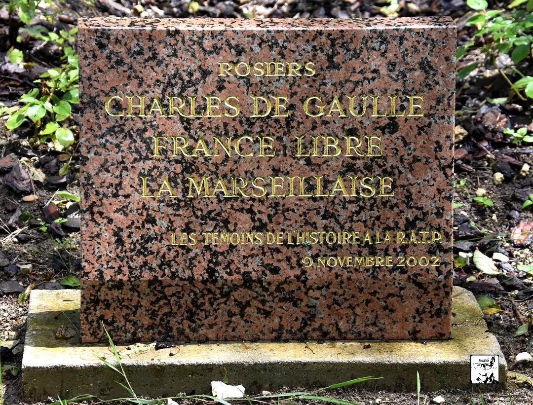 Rosiers Charles de Gaulle - Colombey les Deux Eglises (3)