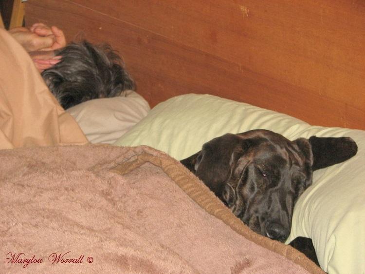 Nouvelles du Canada 153 : Émilie, une vie de chien