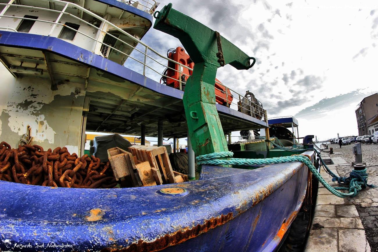 Sur les quais du Port de Sète