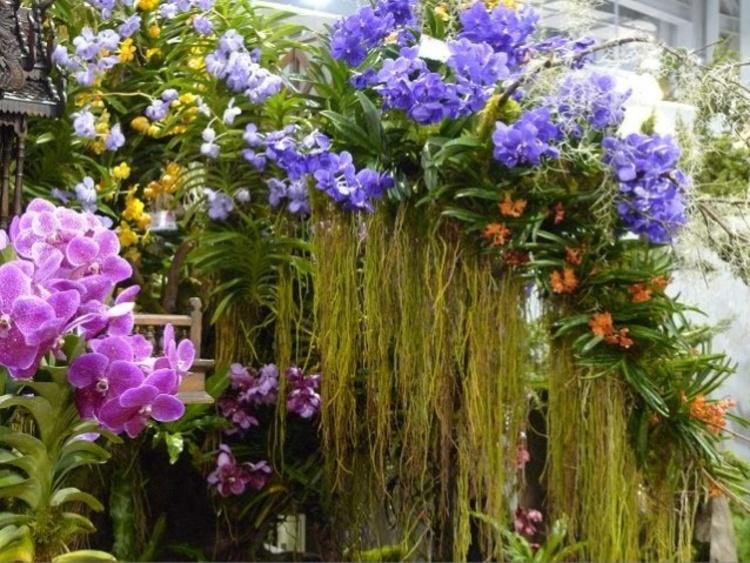 Exposition Florale(des photos magnifiques a voir)