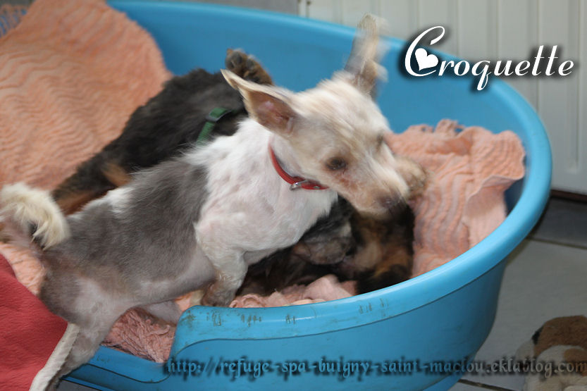 Vitalia et Croquette