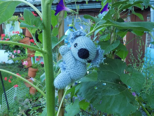 Koala l'ami de Max