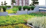 Un toit végétalisé, à Toronto (Crédit : Scott Torrance Landscape Architect Ltd)
