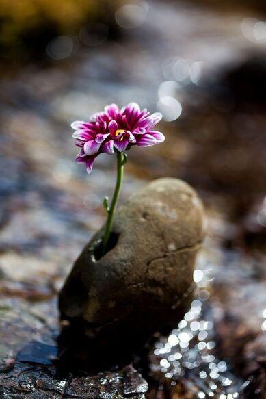 Les 400+ meilleures images de Fleurs d'Espérance en 2020   fleurs, planter  des fleurs, champ de fleurs