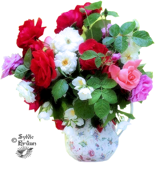 Tubes fleurs création 13