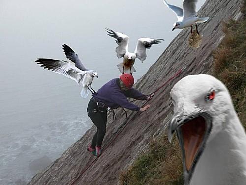 les-oiseaux-hitckook.jpg