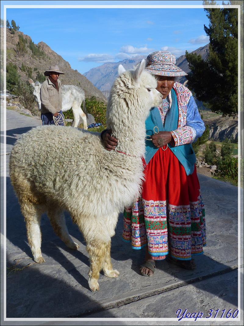 Canyon de Colca - Pérou