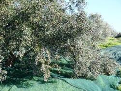 arbre croulant