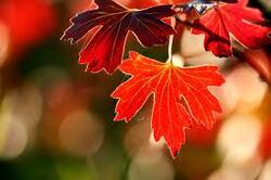 automne :rentrée