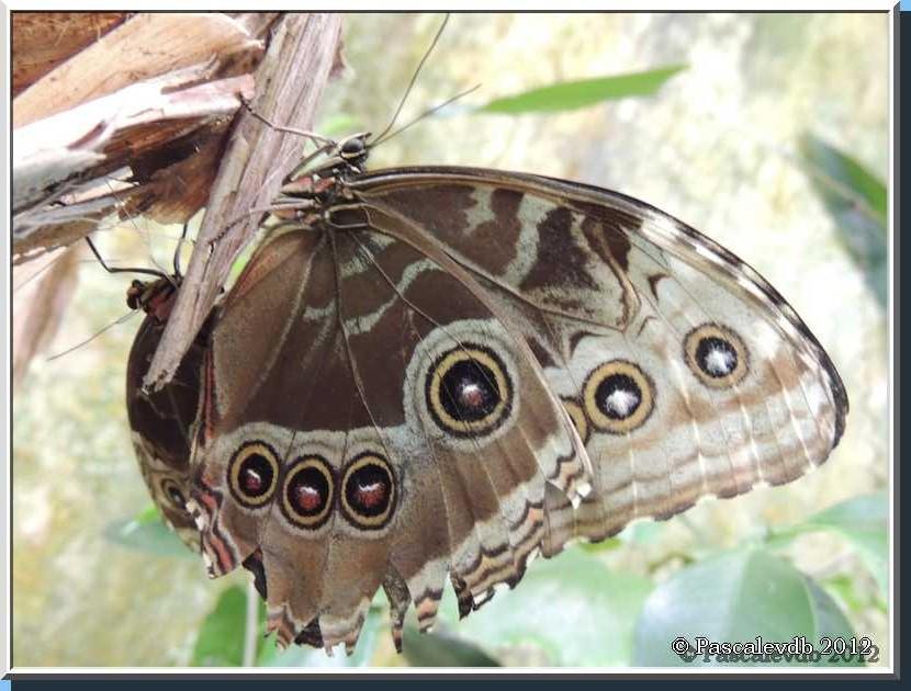 Le Paradis des Papillons à Sanguinet - 5/9