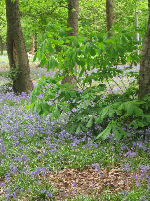 Le parc boisé des Chartreux